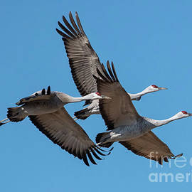 Tight Formation by Mike Dawson