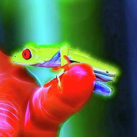 Red Eye Tree Frog by Alex Nikitsin