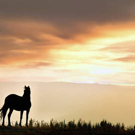 Wild Horse Sunset by Leland D Howard