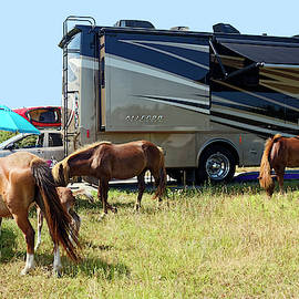 Wild Horses in Campsite by Sally Weigand
