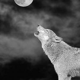 Bark At The Moon - Paintography by Dan Friend