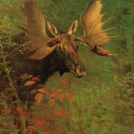 Study of a Moose by Albert Bierstadt
