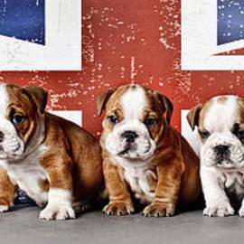 Bulldog puppies by Waldek Dabrowski