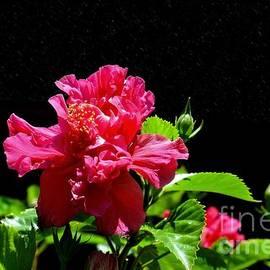 Graham Buffinton - Flower