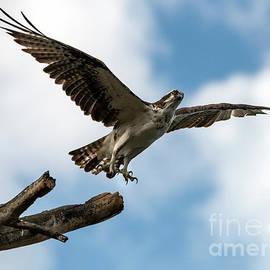 Take off by Mike Dawson