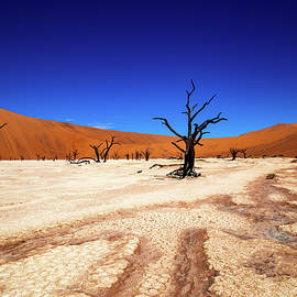 DeadVlei by Laetitia Becker