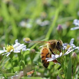 A bees breakfast  by Jennifer Wallace