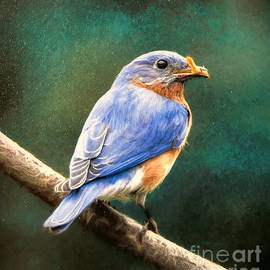 A Bluebird And His Worm by Tina LeCour