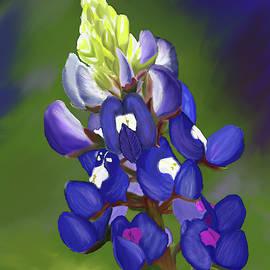A Bluebonnet Love by Julieanne Case