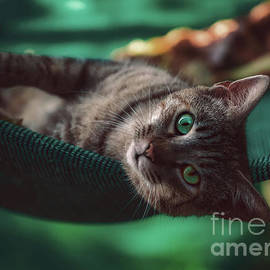 A Cat With Turquoise Eyes by Flo Photography