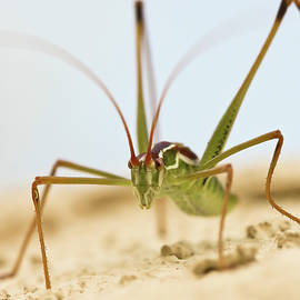 A Close Up View of a Katydid by Derrick Neill