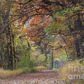 A Fall Walk by John Franke