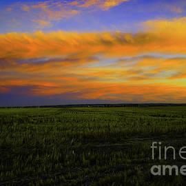 A field at dusk  by Jeff Swan