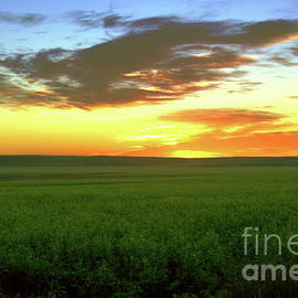 A field at sunset by Jeff Swan