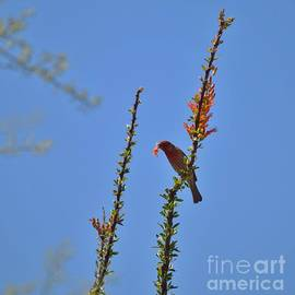 A Flower For His Lady Bird by Janet Marie