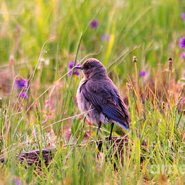 A Fluffy Blue Bird by Jeff Swan