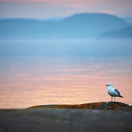 A Gulls Life by Doug Gibbons