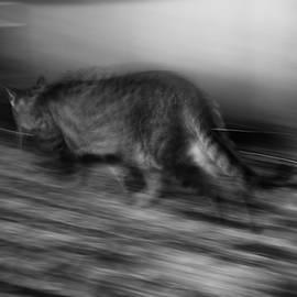 A Hunter by Yulia Kazansky