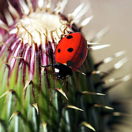 A Ladybug on a Thistle by Derrick Neill