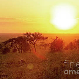 A Lion Celebrates The Sunrise by Kay Brewer