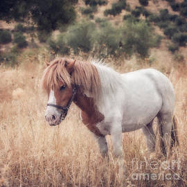 A Little Pony In Summer by Flo Photography