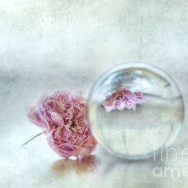 A Little Withered Rose by Flo Photography
