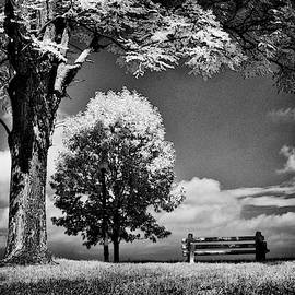 A Lone Bench Under A Tree Under A Tree by Paul W Faust - Impressions of Light