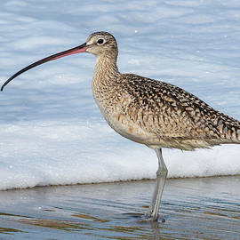 A Long-billed Curlew 4/08 by Bruce Frye