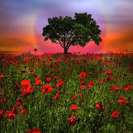 A Magical Evening in Poppies by Debra and Dave Vanderlaan