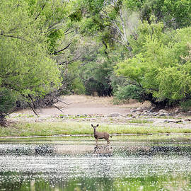 A Pastoral View by Cathy Franklin
