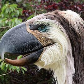 A Phorusrhacos or Terror Bird, Chester Zoo, Cheshire, England, G by Derrick Neill