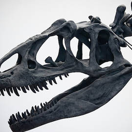 A Portrait of an Allosaurus Skull by Derrick Neill