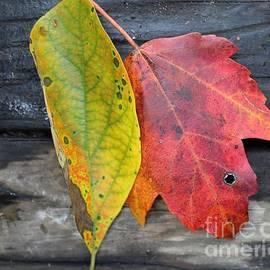 A Rainbow Autumn by Anne Ditmars