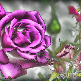 A Rose For Carel by Lawrence Davis