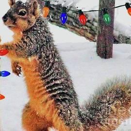 A Fox Squirrel Christmas by Janette Boyd