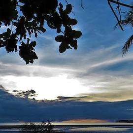 A storm toppled the Mangrove Tree by Joan Stratton