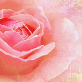 A Sweetheart of a  Rose by Regina Geoghan