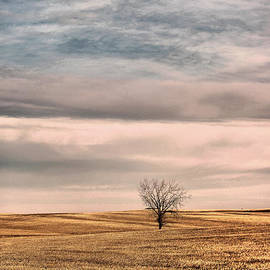 A tree in no where  by Jeff Swan