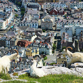 A Trio of Great Orme Goats High Above Llandudno, Wales, GB, UK by Derrick Neill