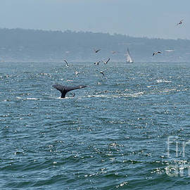 A Whale's Tail Above Water With Sail Boat In The Background by PorqueNo Studios