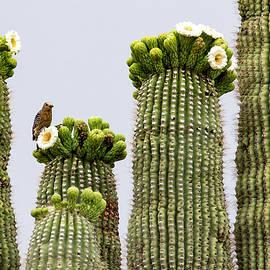 A Woodpecker's Perch by Cathy Franklin