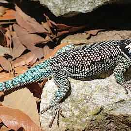 A Yarrow, or Mountain, Spiny Lizard, Sceloporus jarrovii by Derrick Neill