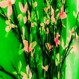 Abstract Blossoms by Lisa Simmons