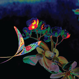 Abstract Butterfly and Flower by Peter Antos