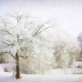 Terry Davis - Abstract Snowy Trees