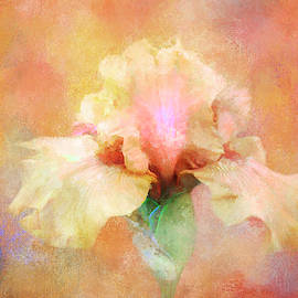 Abstract Yellow Iris by Terry Davis