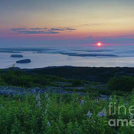 Acadia Sunrise by Dale Kohler