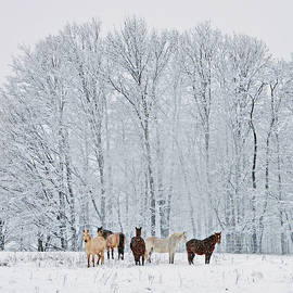 Patricia Keller - Add A Touch Of Horses To The Winter Magic
