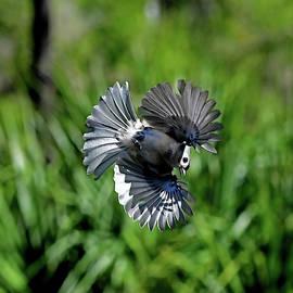 Aerial Acrobat by Stuart Harrison