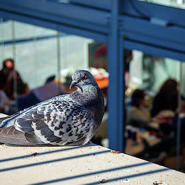 Angry Pigeon by Borja Robles